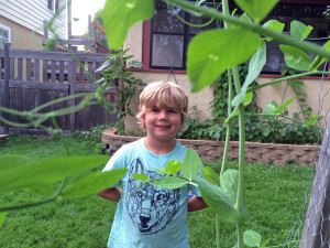 The peas are significantly taller than Griffin at this point.