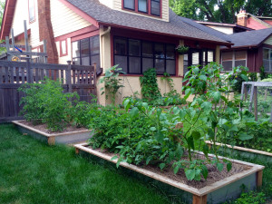 New raised beds are looking alive!
